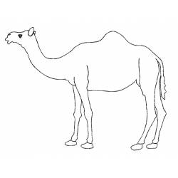 Camel Outline Machine Embroidery Design